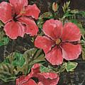 Antique Hibiscus Black 2 by Debbie DeWitt