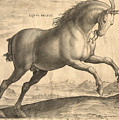 Antique Horse Engraving - Equus Regius by Village Antiques