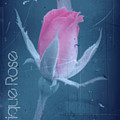 Antique Rose 3 by Donna Bentley