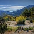 Anza-borrego Desert State Park Desert Flowers by Randall Nyhof