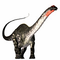 Apatosaurus Profile by Corey Ford