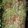 Appalachian Arbor Flora by Joshua Bales