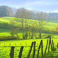 Appalachian Spring Morning by Francesa Miller