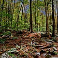 Appalachian Trail Clearing by Mark Schiffner