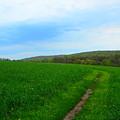 Appalachian Trail In Northern Maryland by Raymond Salani III