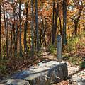Appalachian Trail In Shenandoah National Park by Louise Heusinkveld