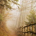 Appalachian Trail by Jill Love