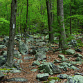 Appalachian Trail With Moss Covered Rocks by Raymond Salani III