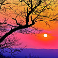 Appalcahian Sunset Tree Silhouette  #1 by The American Shutterbug Society