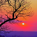 Appalcahian Sunset Tree Silhouette #2 by The American Shutterbug Society