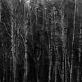 Apparition by Venetta Archer
