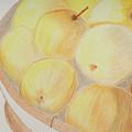 Apple Basket Colored Pencil Sketch