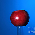 Apple Before Bullet Impact by Ted Kinsman