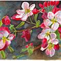 Apple Blossom 2 by Dai Wynn