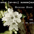 Apple Blossom By Definition Michigan by Sharon Popek