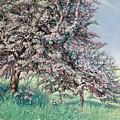 Apple Blossom by Carlos Schwabe