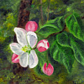 Apple Blossoms by FT McKinstry