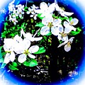 Apple Blossoms In Blue White Mist by Debra Lynch