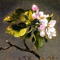 Apple Blossomss by MotionAge Designs