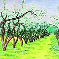 Apple Garden In Blossom by Irina Afonskaya