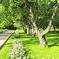 Apple Garden by Irina Afonskaya