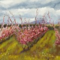 Apple Hill Springtime by Brenda Williams