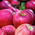 Apple Love by Teri Virbickis