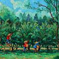 Apple Pickers  Littletree Orchard  Ithaca Ny by Ethel Vrana