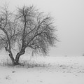 Apple Tree In The Winter by Edward Myers