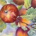 Apples by Alice Crapo