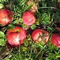 Apples From My Garden by Irene Vital