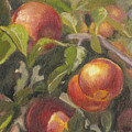 Apples In The Orchard by Christopher James
