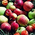 Apples by Sarah Loft