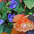 Apricot Begonia 1 by Janis Nussbaum Senungetuk