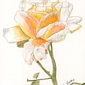 Apricot Rose by Alexis Grone