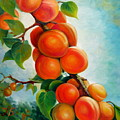 Apricots In The Garden by Nadia Bykova