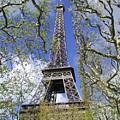 April In Paris by Tom Reynen