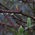 April Showers by Steven Natanson