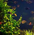 Aquarium Fish And Plants In Zoo by Arletta Cwalina