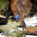 Aquarium Fish At Stones Arrangement by Arletta Cwalina