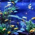 Aquarium Fish by John Myers