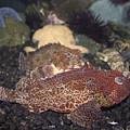 Aquarium Fish by Steven Parker