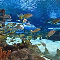 Aquarium by Jill Lang