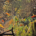 Aquarium Reflections by Lydia Holly