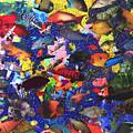 Aquarium by Steve Fields