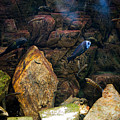 Aquarium Stones Arrangement by Arletta Cwalina