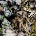 Aquino's Butterflies by Joseph Yarbrough