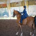 Arabian Dressage by Louis Ferreira