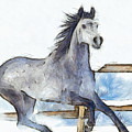 Arabian Horse And Snow - Da by Leonardo Digenio