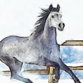 Arabian Horse And Snow - Pa by Leonardo Digenio